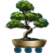 Chinese-Restaurant-Bonsai-Tree