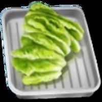 Food-Court-Lettuce-Leaves