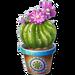 Cafe-Mexicana-Cactus