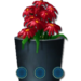Pizzeria-Flower-Pot
