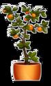 Salad-Bar-Orange-Tree