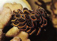 Sea slug4