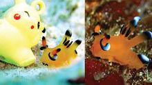 Pokemon-sea-slug