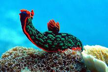 Sea slug 04