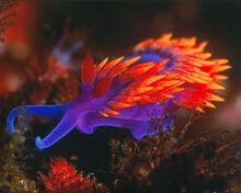 1-Bradford-nudibranch