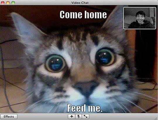 File:Feed me.jpg