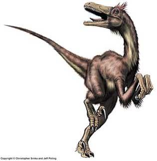 Neunquenraptor.
