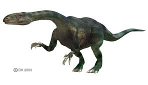 Thecodont