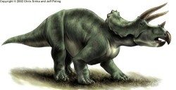 250px-Triceratops