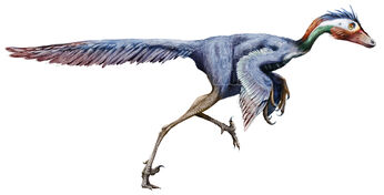 Jinfengopteryx elegans by Sheil