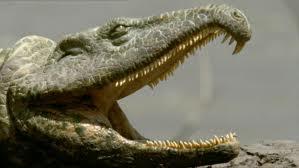 Proterosuchus1