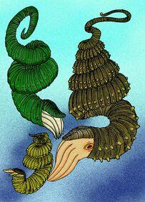 Didymoceras species