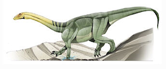 Anchisaurus 01