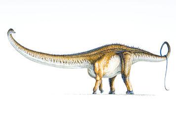 Barrosaurus