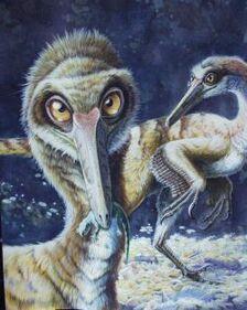 Buitreraptor1