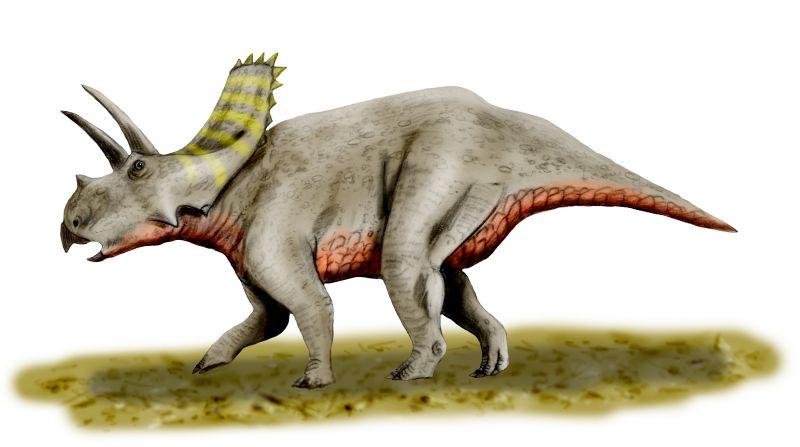 Arrhinoceratops   Cool Dino Facts Wiki   FANDOM powered by ...  Arrhinoceratops...