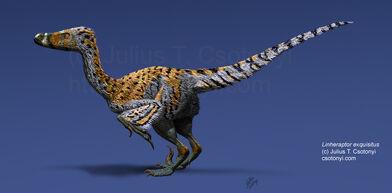 Linheraptor exquisitus Csotonyi