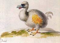 White dodo