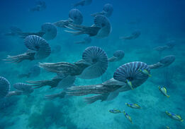 Ammonites1
