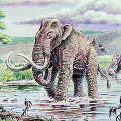 Mammuthus imperator1