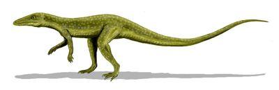 Saltoposuchus 1