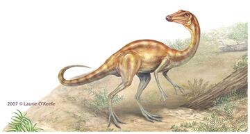 Arkansaurus-okeefe