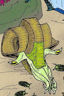 Araxoceras latissimum2