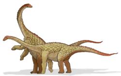 250px-Saltasaurus dinosaur