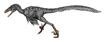 400px-800px-Bambiraptor