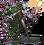 HeroForest Druid
