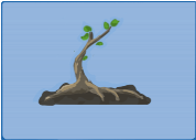 Tree Planting 0