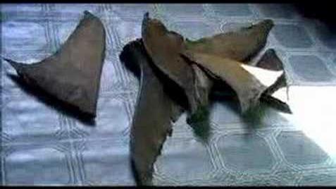 Sharkwater Trailer