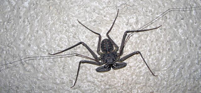 File:Cr scorpion lg.jpg
