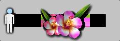Y19s3cosflower