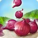 OnionsRibbon