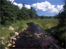 Ripisylve rivière