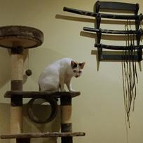 Capture Aron Cat
