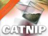 Shop catnip