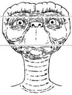 Face-ET