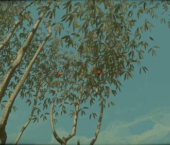 Дерева сливоливки 1