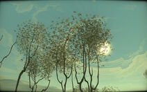 Дерева сливоливки