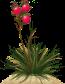 Пустынный куст ягодный