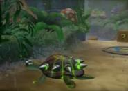 Turtle Woods