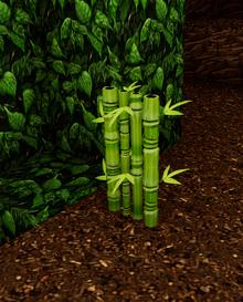 Wild bamboo jungle