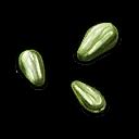 Lettuce Seed