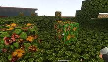Creativerse growing wildwood flowers70