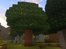 Creativerse cragwood tree grown from sapling 2018-10-16 13-19-17-34