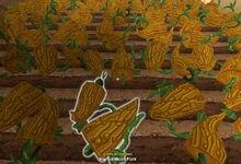 Creativerse Melons grown 2017-08-11 20-56-38-14