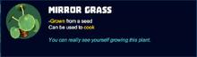 Mirror grass desc