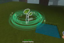 Creativerse saplings fertilized001